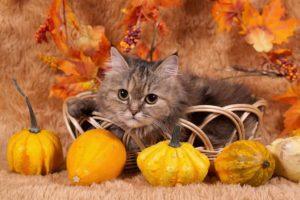 animali e halloween_petcare