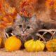 animali_halloween_petcare_starsana